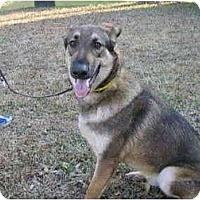 Adopt A Pet :: Arthur - Green Cove Springs, FL