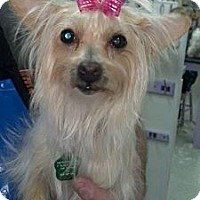 Adopt A Pet :: Juliette - Encinitas, CA