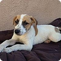 Adopt A Pet :: MAX - Inglewood, CA