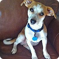 Adopt A Pet :: Sasha - Crane Hill, AL