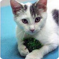 Adopt A Pet :: Beaker - Chicago, IL