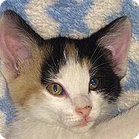 Adopt A Pet :: Cali - Winchester, CA