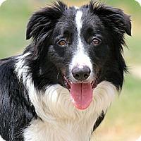 Adopt A Pet :: OLY - Nampa, ID