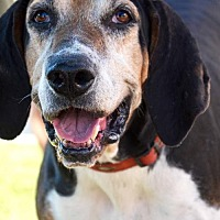 Adopt A Pet :: Jethro - Roswell, GA