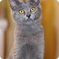 Adopt A Pet :: Sophie - Edmond, OK