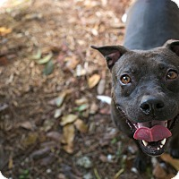 Adopt A Pet :: Luna - Palmetto Bay, FL