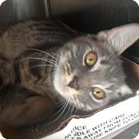 Adopt A Pet :: Grace - East Brunswick, NJ