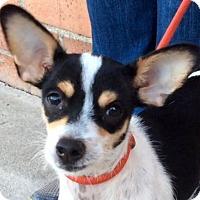 Adopt A Pet :: RUE (video) - Los Angeles, CA