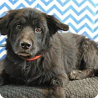 Adopt A Pet :: Batman - Starkville, MS