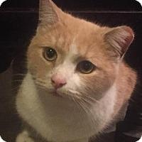Adopt A Pet :: Choppo - Philadelphia, PA