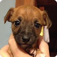 Adopt A Pet :: Jonathan - Gilbert, AZ