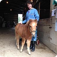 Adopt A Pet :: Titan - Dewey, IL