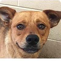 Adopt A Pet :: Felicai - Springdale, AR