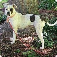Adopt A Pet :: Libby - Polson, MT
