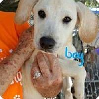Adopt A Pet :: Finn - Uxbridge, MA