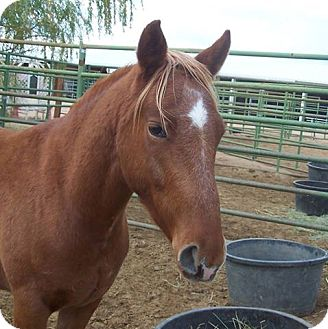 Mustang Mix for adoption in Lancaster, California - Cakes