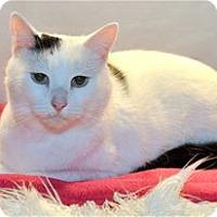Adopt A Pet :: Snowflake - Lincoln, CA