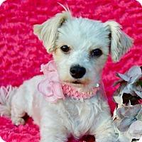 Adopt A Pet :: Kiki - Irvine, CA