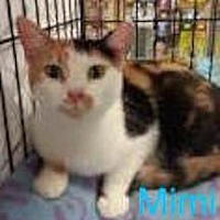 Adopt A Pet :: Mimi - Satellite Beach, FL