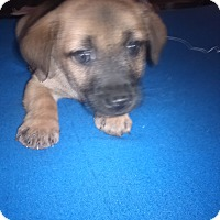 Adopt A Pet :: Marc - Kendall, NY