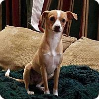 Adopt A Pet :: Barbara - DeForest, WI