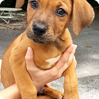 Adopt A Pet :: Armani - Key Largo, FL