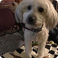 Adopt A Pet :: DIZZY - Los Angeles, CA