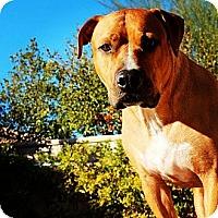 Adopt A Pet :: Kapo - san diego, CA