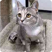 Adopt A Pet :: Wendy - Clementon, NJ