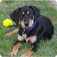 Adopt A Pet :: Macy - DeKalb, IL