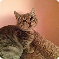 Adopt A Pet :: Skippy - East Hanover, NJ