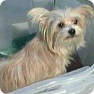 Adopt A Pet :: Margeaux