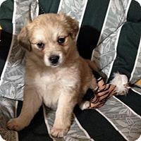 Adopt A Pet :: Hazelnut - Saskatoon, SK