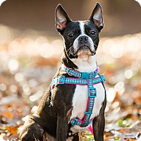 Adopt A Pet :: Gracie - Greensboro, NC