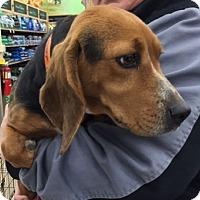 Adopt A Pet :: Tipper - Richmond, VA