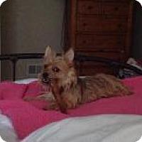 Adopt A Pet :: Sloan - Mount Gretna, PA
