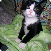 Adopt A Pet :: CELESTENO - Ridgewood, NY