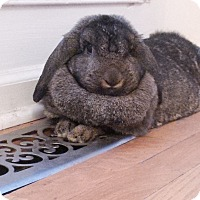 Adopt A Pet :: Mocha - Conshohocken, PA