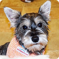 Adopt A Pet :: Scrappy - Hazard, KY