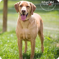 Adopt A Pet :: Norma Jean - Westminster, MD