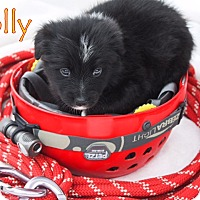 Adopt A Pet :: Rolly - Austin, TX