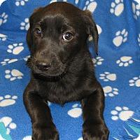 Adopt A Pet :: Briggs - Charlemont, MA