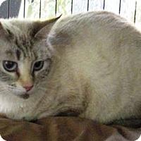 Adopt A Pet :: PRECIOUS - DeLand, FL