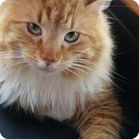 Adopt A Pet :: Julian - Trinity, NC