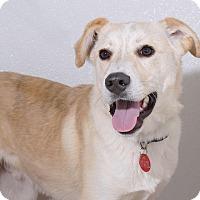 Adopt A Pet :: Lemon - Sudbury, MA