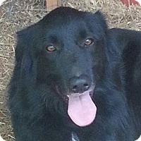 Adopt A Pet :: Cooper - Allentown, PA
