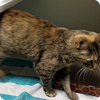 Adopt A Pet :: BONNIE - Putnam Hall, FL