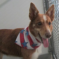 Border Collie Dog for adoption in Holton, Kansas - Cherry