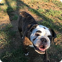 Adopt A Pet :: Princess - Jacksonville, AL