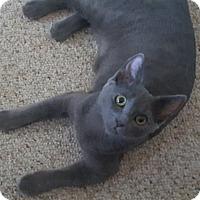 Adopt A Pet :: Ashton - Pasadena, CA